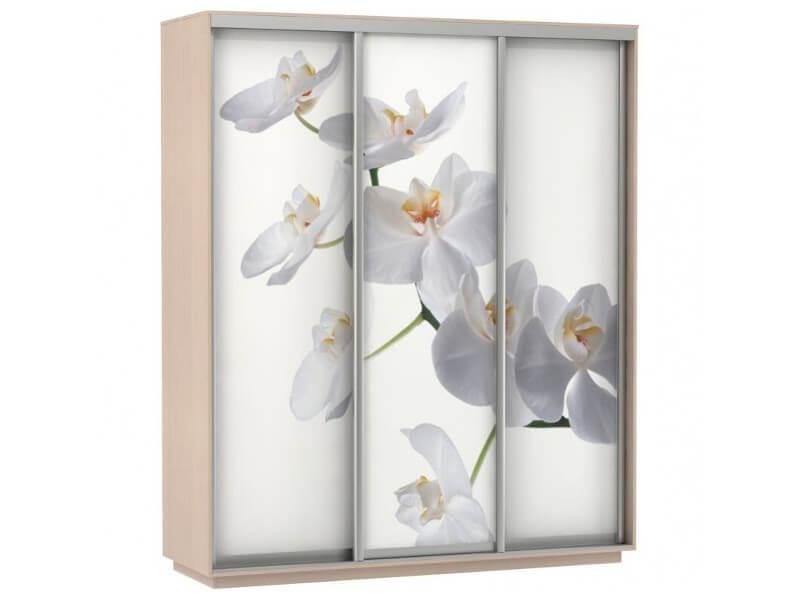 Фото Орхидея 1800 1800х2200х600